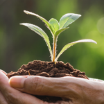 Sustentabilidade na construção civil: um compromisso da D6 Empreendimentos